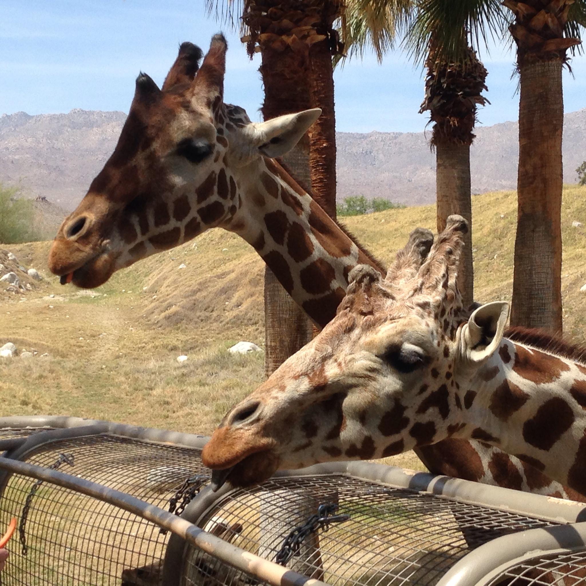 The Living Desert Zoo Amp Gardens 47900 Portola Ave Palm