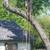 Chuck Holloway's Tree Care LLC