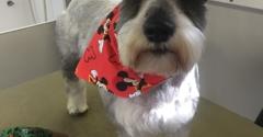 Mad dog mobile grooming 79938 yp mad dog mobile grooming el paso tx solutioingenieria Image collections