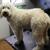 Sassafras Pet Spa, LLC
