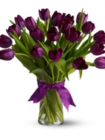 Purple Passion Tulips!