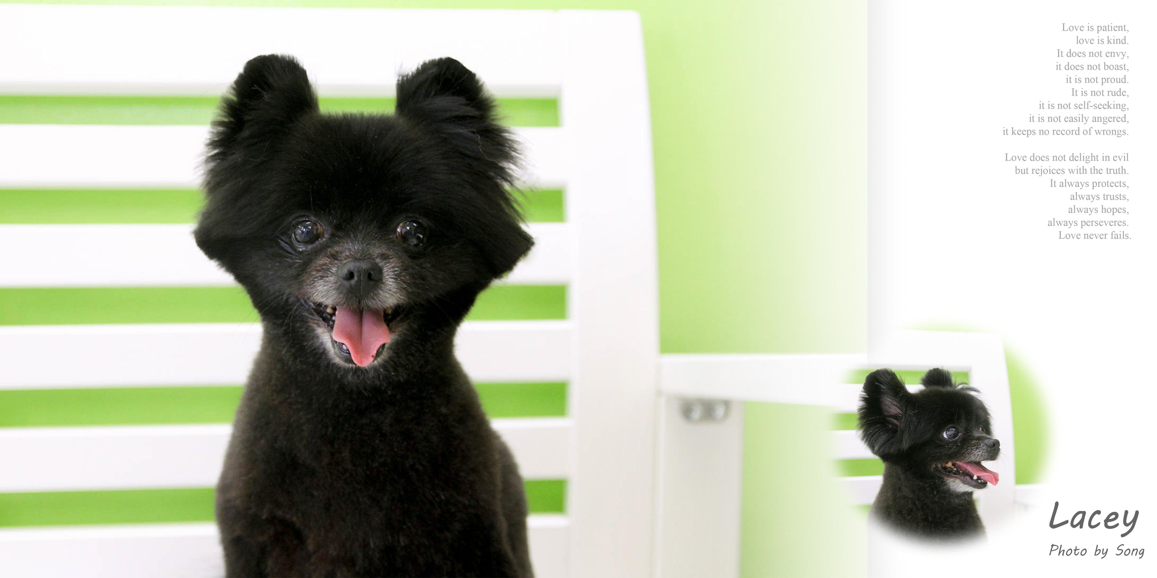 Songs pet grooming 573 w vista way vista ca 92083 yp solutioingenieria Choice Image