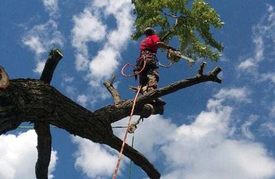 Affordable Tree Service 505 E Locust St