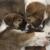 Pet Network Humane Society