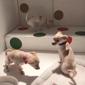 San Francisco SPCA Mission Adoption Center - San Francisco, CA