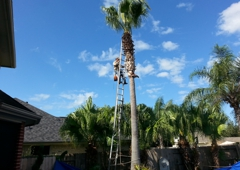 Texans Tree Service - Houston, TX