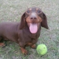 Metrowest Veterinary Clinic - Orlando, FL