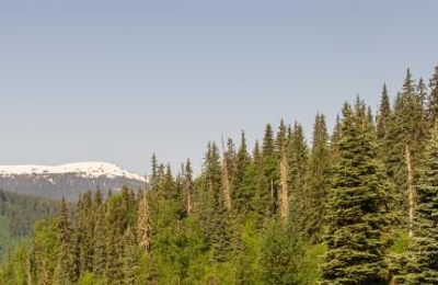 Affordable Tree Removal - Anchorage, AK