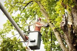 Affordable Carolina Tree Service tree pruning Columbia, SC
