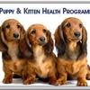 All Valley Pet Hospital