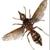 Elder Pest Control