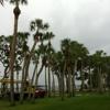 TR Lawn & Tree