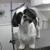 AAA-Port-A-Pet Grooming Salon On Wheels