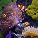 Aquarium Designs, Inc.