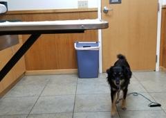 Millville Veterinary Clinic - Millville, CA