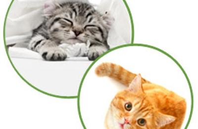 Aristokatz - Veterinary Care for Cats - Fairfield, CT