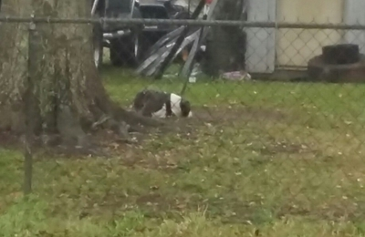 Terrebonne Parish Animal Shelter - Houma, LA. This poor dog is in the puring rain right now no  food no water no house to get out the rain it's on Neil Lane in Montague off high way 55
