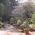 Manzanita Landscape