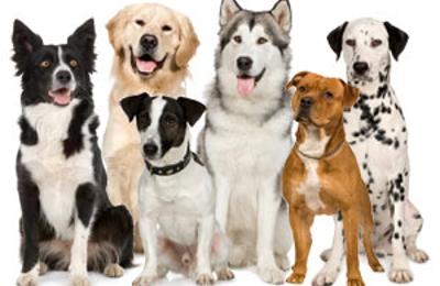 Brown's Dog Training Lodging & More - Minneapolis, MN