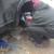 Cheap Mobile Mechanic