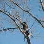 All Season Tree Care - Redding, CT