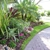 Lisa James Curb Appeal Gardening Services