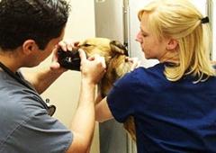 Twins Veterinary Hospital - Bay Shore, NY