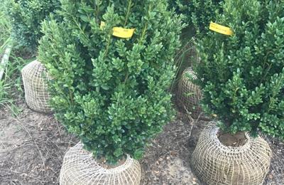NJ Plants and Trees LLC. - Burlington, NJ