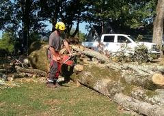U-SaveMore Tree Service - Grayson, GA