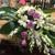 Nita's Flowers & Gifts
