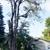 Heights Tree Service