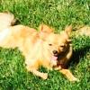 Shaggy Dog Pet Grooming - CLOSED