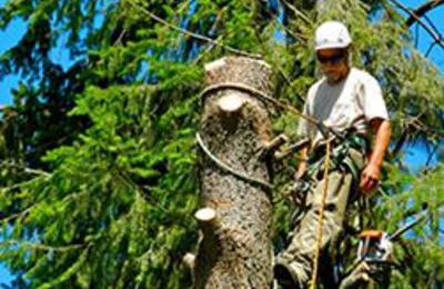 TDR Tree Services - Mesa, AZ