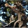 One Tripp Tree Service - San Diego, CA
