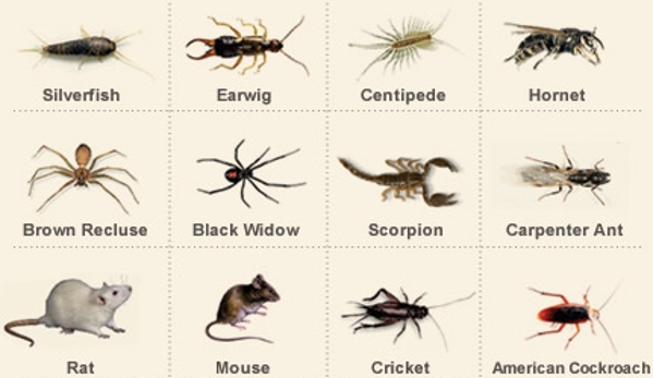 Walden's Pest Control - Bethpage, NY