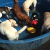 A Dog's Best Friend Doggy Day Care- West