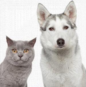 athens animal clinic sidebar