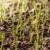 Ryles Grassing