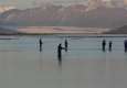 Alaska's Fresh Tracks - Wasilla, AK