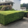 Easy Lawn Care & Landscaping LLC