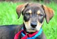 Peggy Adams Animal Rescue League - West Palm Beach, FL