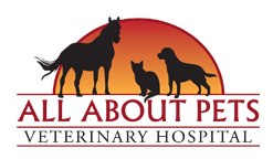 Veterinary Animal Clinic in Chico