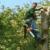 Clark Tree Expert Company