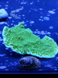 Reef Oasis