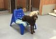 Pet Lodge & Spa - Leesburg, FL