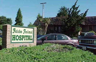 Adobe Animal Hospital - Concord, CA