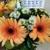 A Pleasant Grove Florist