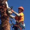 B & M Gardening & Tree Services
