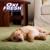 Oxi Fresh of Modesto Carpet Cleaning