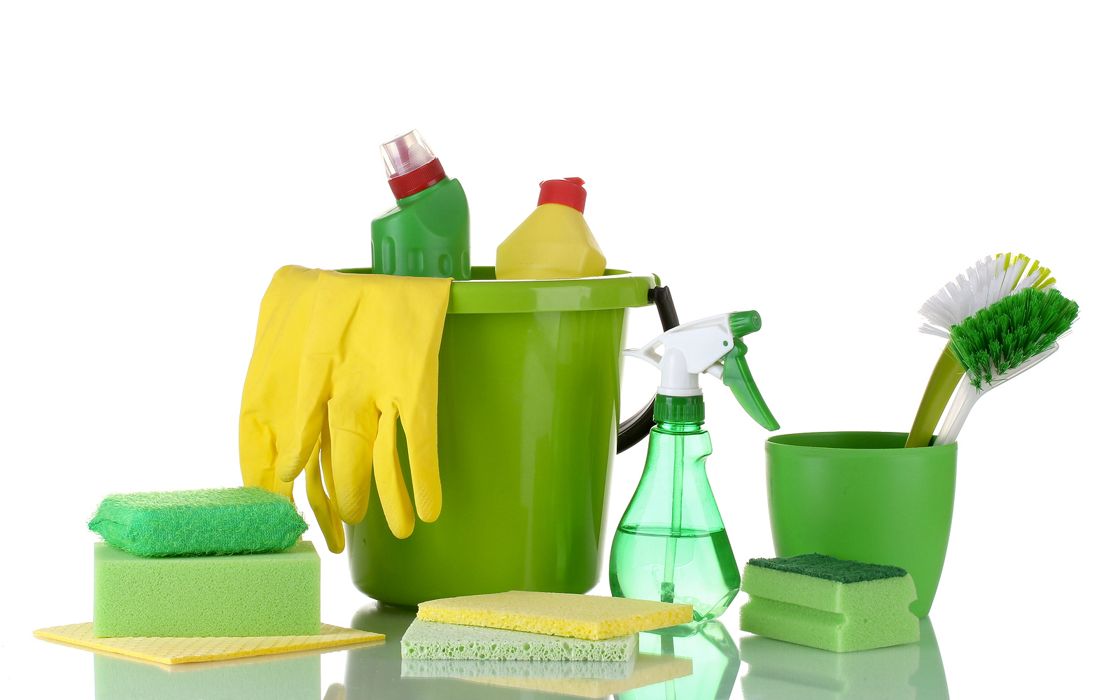 green butterfly cleaning services llc 108 park ter bridgeport ct